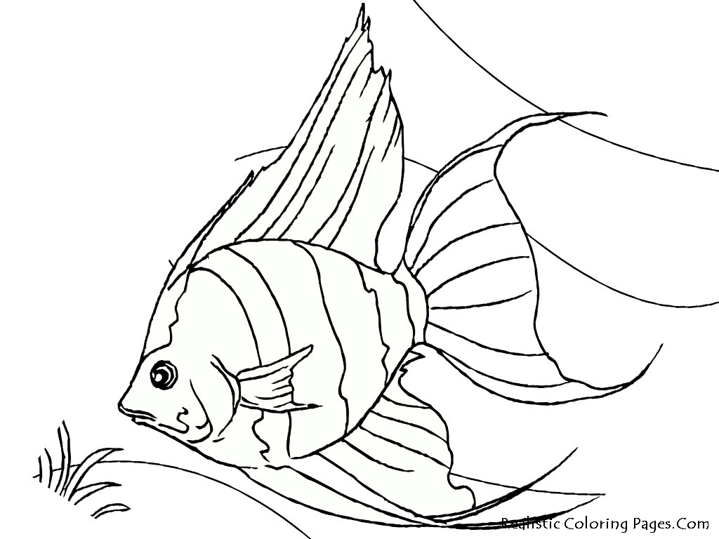 1024x768 Angel Fish Coloring Page Angel Fish Coloring Page Angelfish
