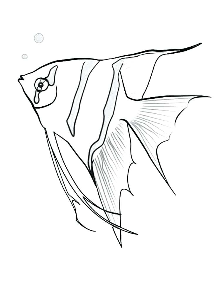 750x1000 Perfect Angel Fish Coloring Page Angelfish Free Printable Pages