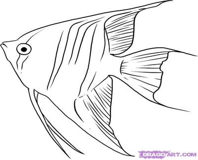 400x322 Sketch Of Fish Fin Coloring How To Draw An Anglerfish Step By