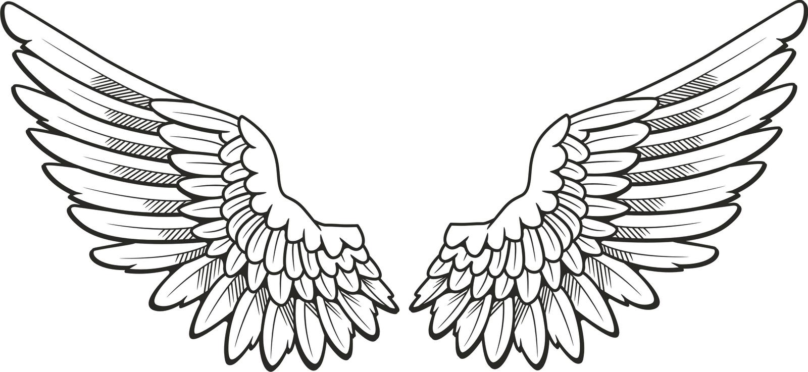 1600x737 Angel Wing Cartoon Drawings Angel Wings Drawings