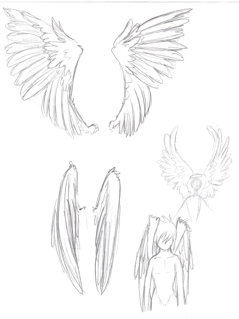 773x1032 Angel Wing Sketch By Ookamiko