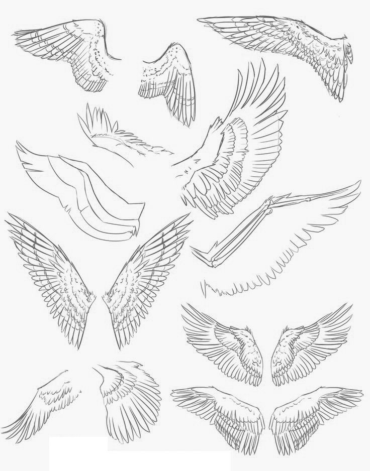 736x938 30 Best Wing Images On Draw, Angel Wings Drawing