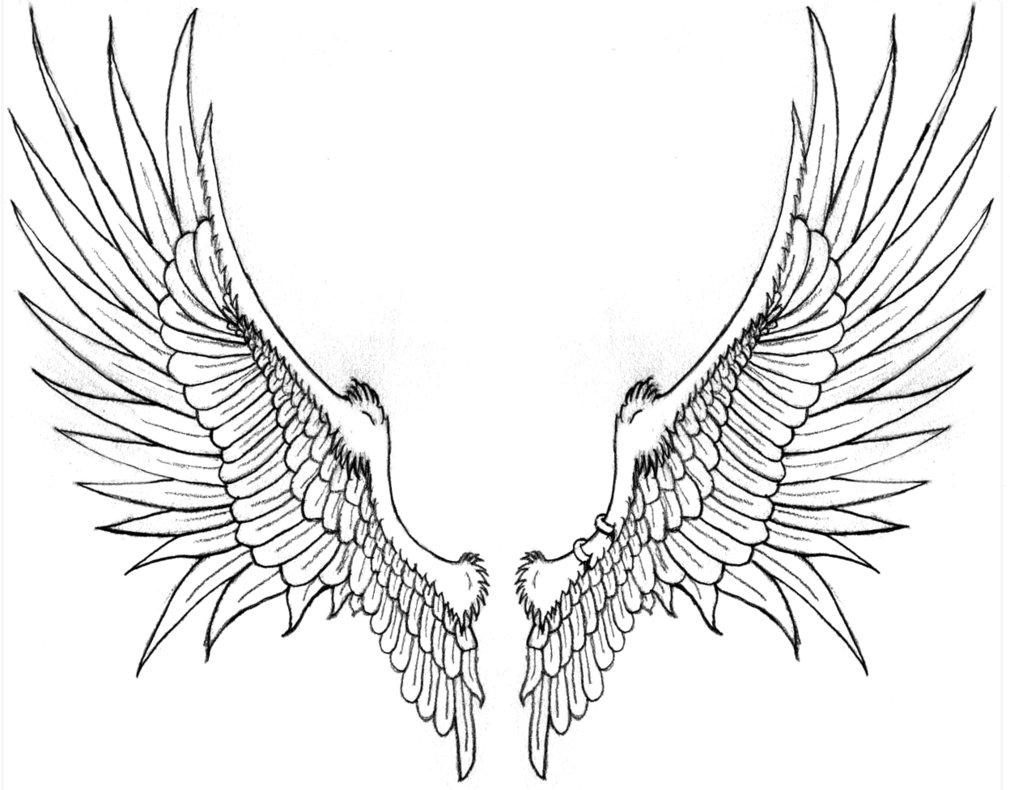 1010x790 Angel Wings Line Drawing Drawn Wings Line Drawing