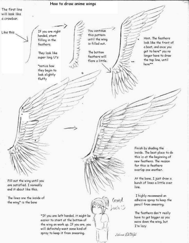 736x946 Drawn Wings Line Drawing