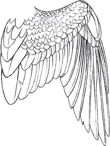 374x495 Drawn Angel Folded Wing