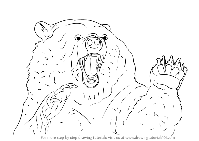 800x566 Learn How To Draw An Angry Grizzly Bear (Bears) Step By Step