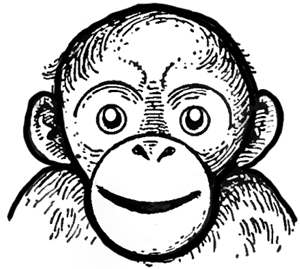 300x269 How To Draw Cartoon Monkeys, Apes, Gorillas, And Chimps Drawing