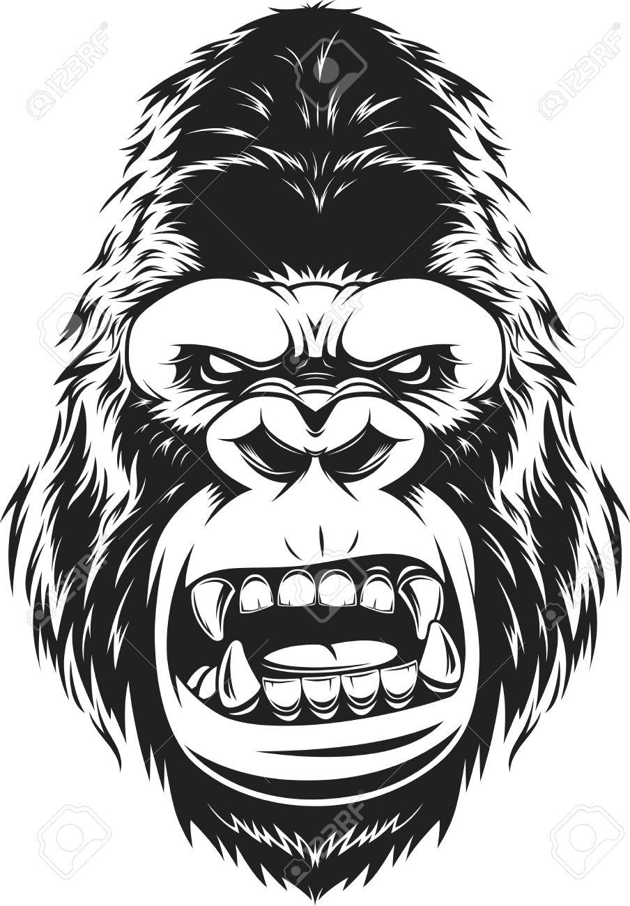 904x1300 Illustration Ferocious Gorilla Head On A White Background Royalty