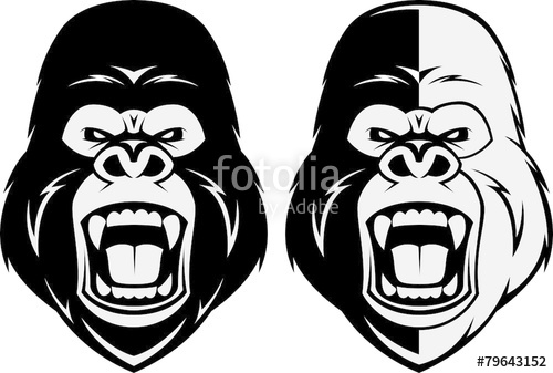500x337 Angry Gorilla Head Stock Image And Royalty Free Vector Files