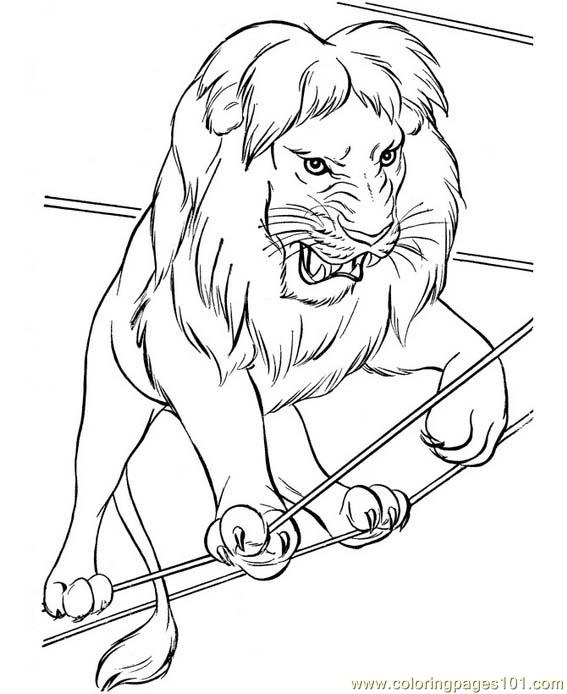 567x694 A Very Angry Lion From The Circus Coloring Page