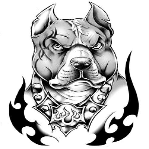 500x500 Incredible Pit Bull Tattoo Design