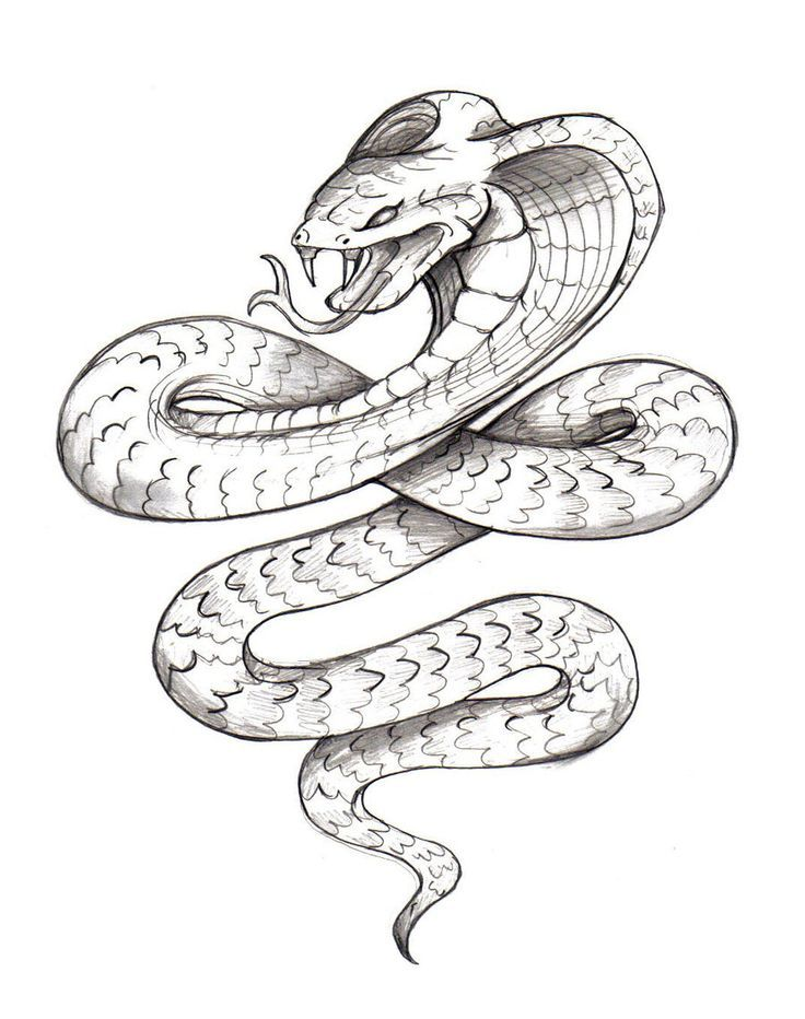 Angry Snake Drawing