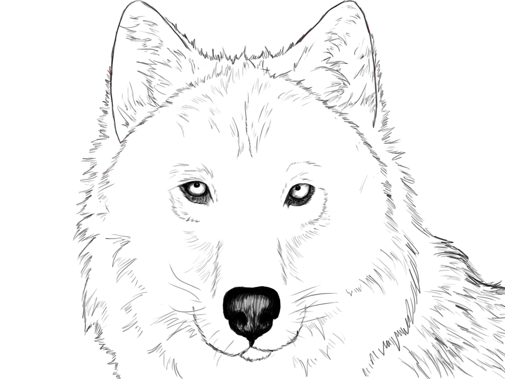 1024x768 Drawing Of A Wolf Face