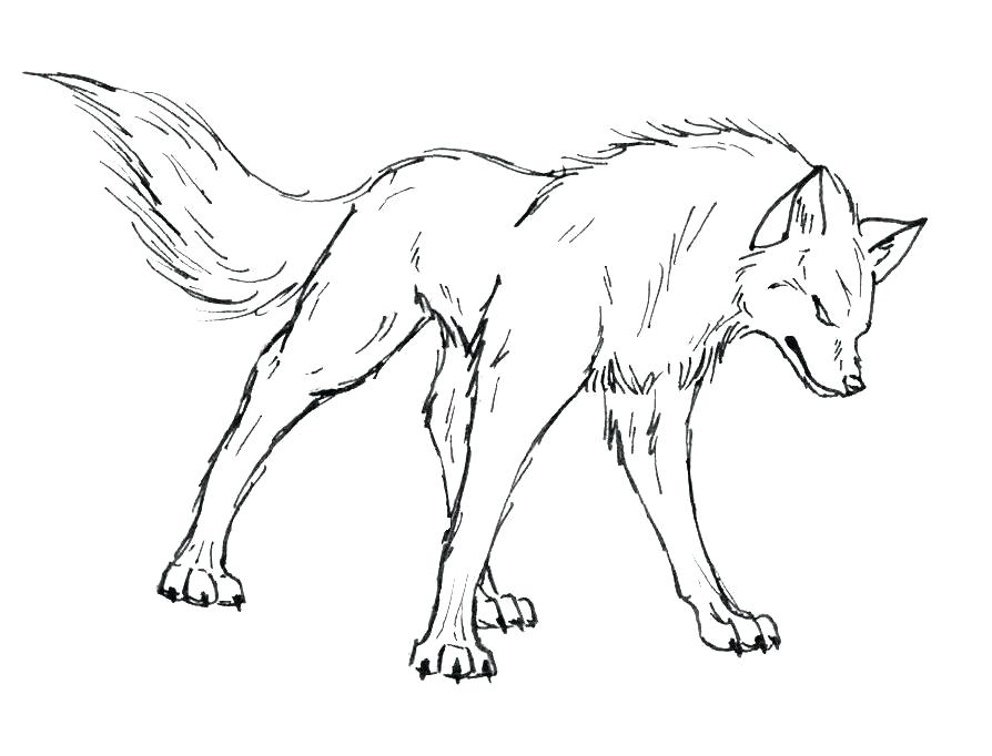894x682 Realistic Wolf Coloring Pages