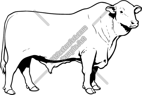 500x336 Angusbull01nc2bw Clipart And Vectorart Animals