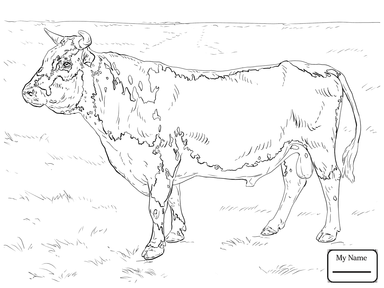 1223x917 Cattle Cow 21 Mammals Coloring Pages For Kids