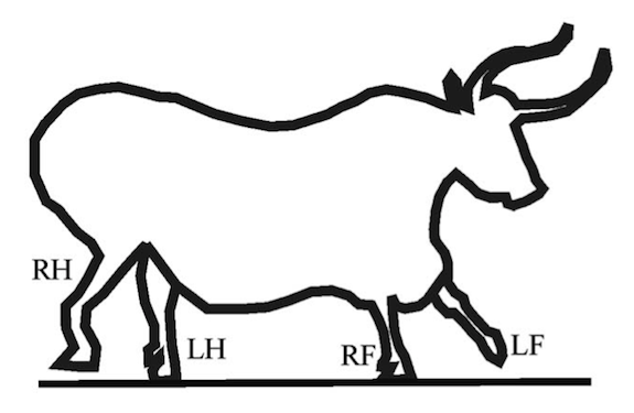 575x375 Cavemen Were Much Better At Illustrating Animals Than Artists