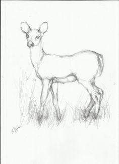 236x324 Coyote Drawing 17 Bus Wrap Animal Drawings