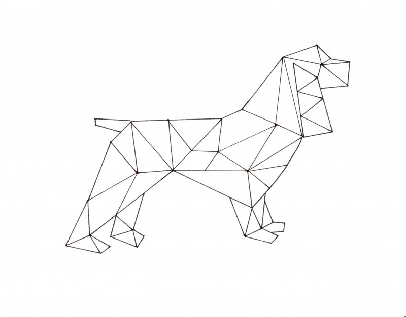 800x626 How To Create Geometric Animal Art Dragonfly Designs