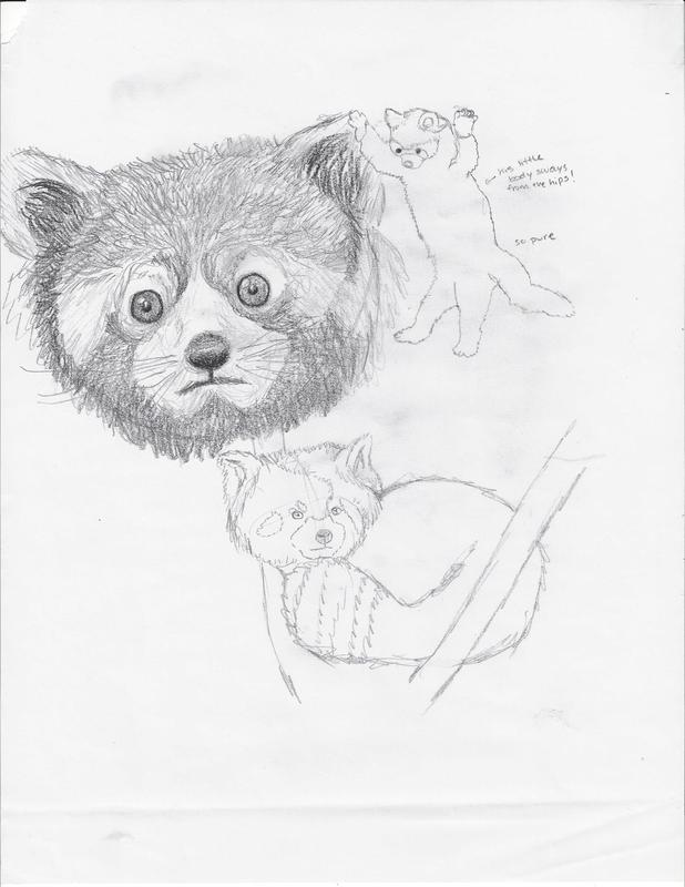 618x800 Animal Observational Drawings