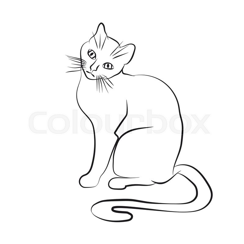 800x800 Cat Face. Black And White Sketch. Vector Illustration Stock