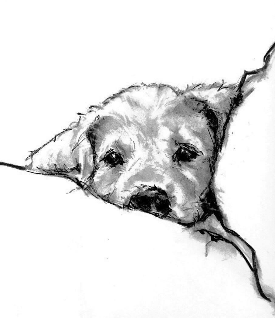 906x1047 Charcoal Drawing By Susan Pepe Animal