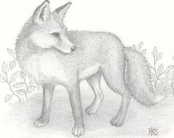 340x270 16 Best Deer Drawing Images On Deer, Draw Animals