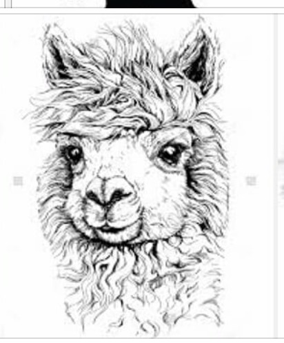412x498 Pin By Patricia Voldberg On Black And White Animals