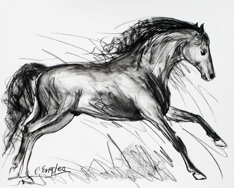 800x645 Valeroso, Stretching Out, Charcoal Drawing By Carol Engles