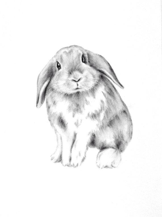 570x761 Wonderful Bunny Nursery Sketch. Osterkarten Bunny