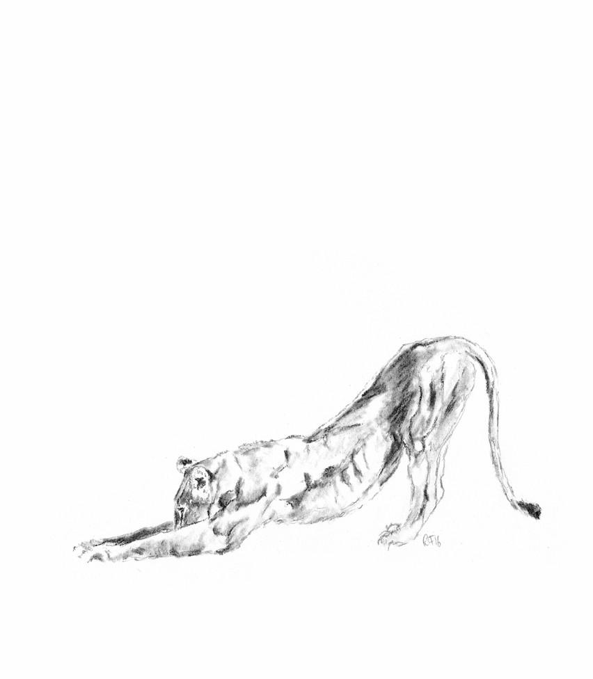 852x976 Lioness