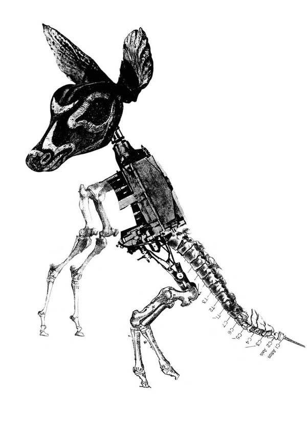 Animal Collage Drawing