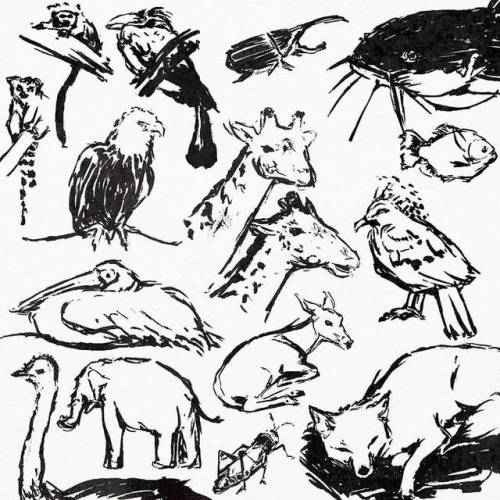 500x500 Journeybunny Inktober Day 3 Zoo Sketches, Spent The Day