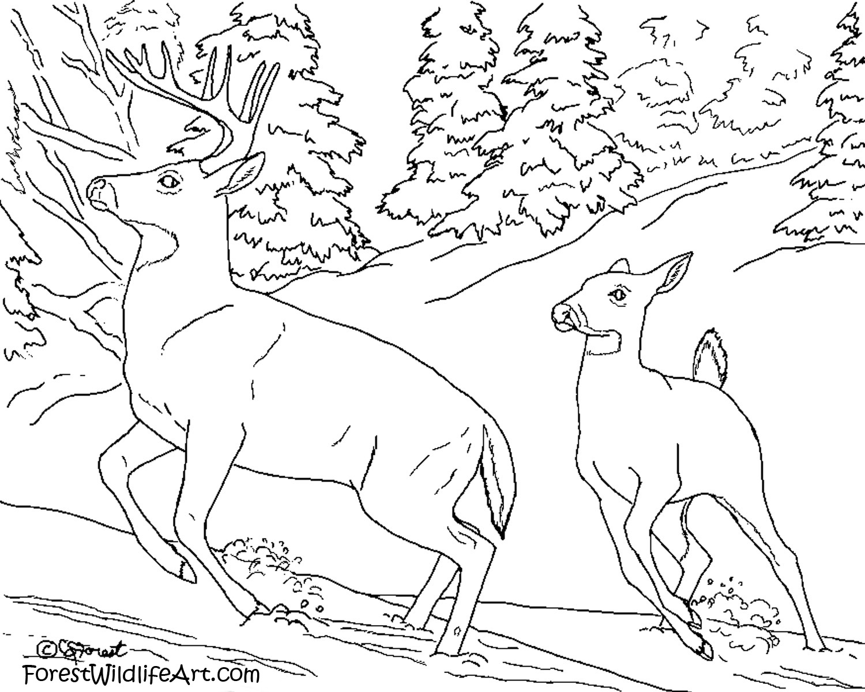 1500x1200 Forest Wildlife Art Learn Wildlife For Kids
