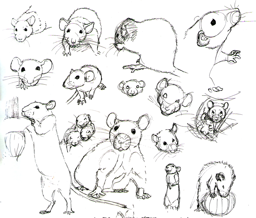 1024x869 Rat Practice 10 By Never On @ Draw