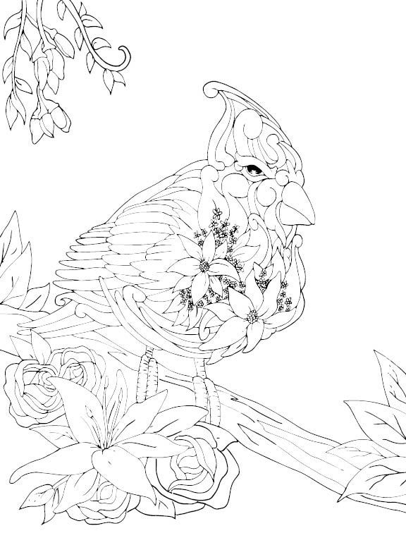 576x756 Animal Drawings I Did For Lampara Books Coloring Book Aeeaiinou2