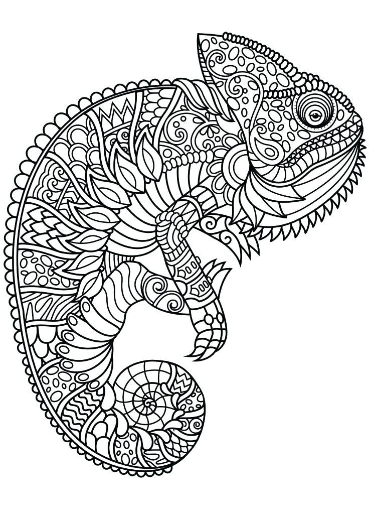 736x1040 Animal Coloring Book Pages Plus Baby Animals 64