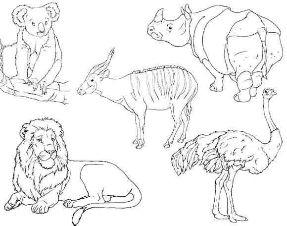 580x456 Zoo Animals Coloring Pages For Preschoolers Coloring Pages