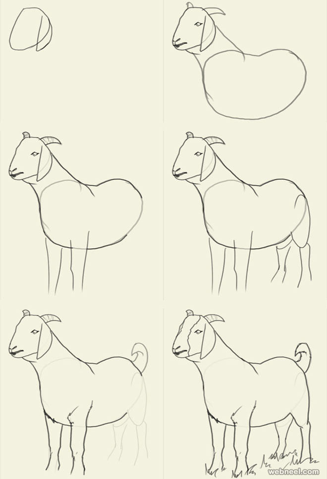 Animal Drawing Images