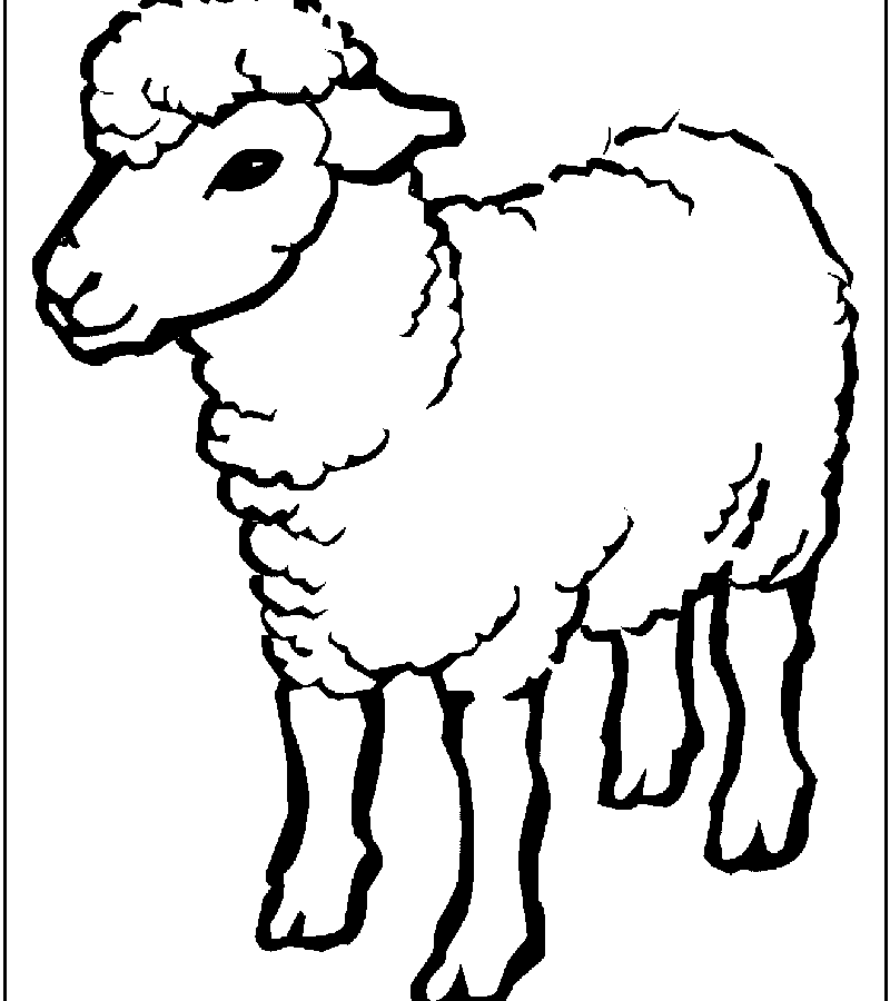 800x900 Cute Small Sheep Coloring Page Free Printable Pages Animals Desert