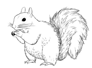 320x238 How To Draw A Squirrel Squirrel, Draw And Animal