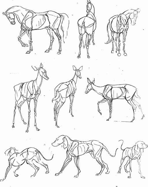 512x644 Animal Drawing Tips