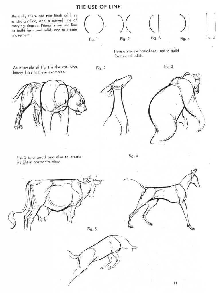 771x1024 Tutorials Drawing Anatomy, Animal