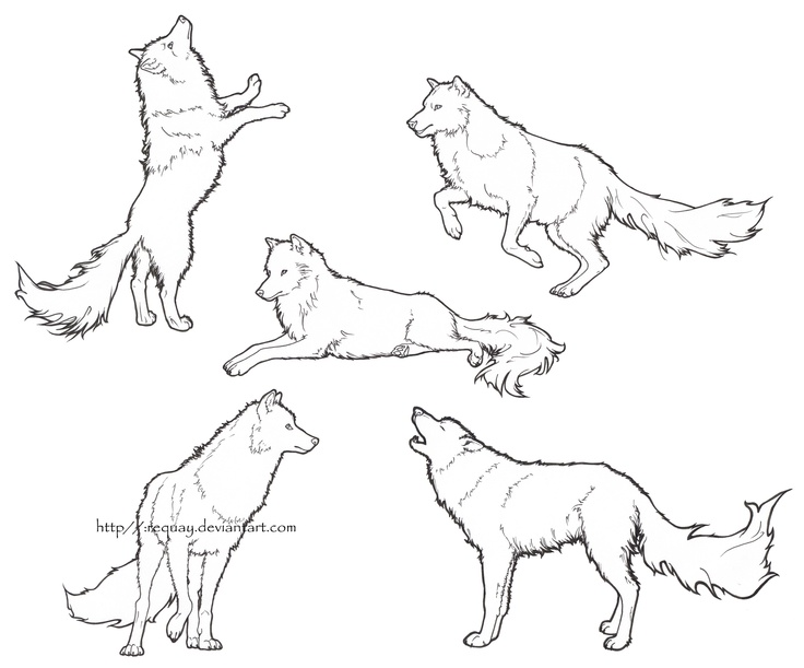 736x611 8 Best Drawling Wolf Images On Drawing Tips, Animal