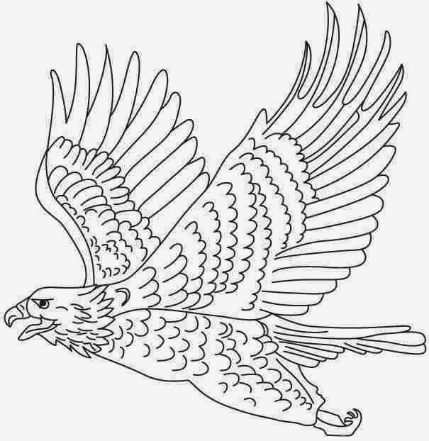 605x622 Colours Drawing Wallpaper Eagle Cartoone Colour Drawing Hd Wallpaper