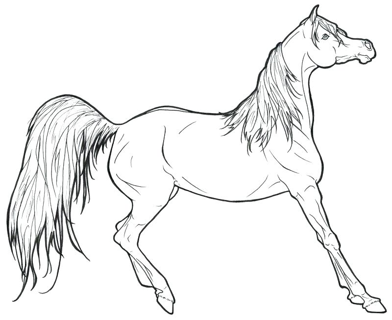 800x653 Beautiful Horse Coloring Pages For Kids Crayola Photo Color And Is
