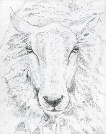 430x542 The Best Sheep Drawing Ideas On Easy Animal