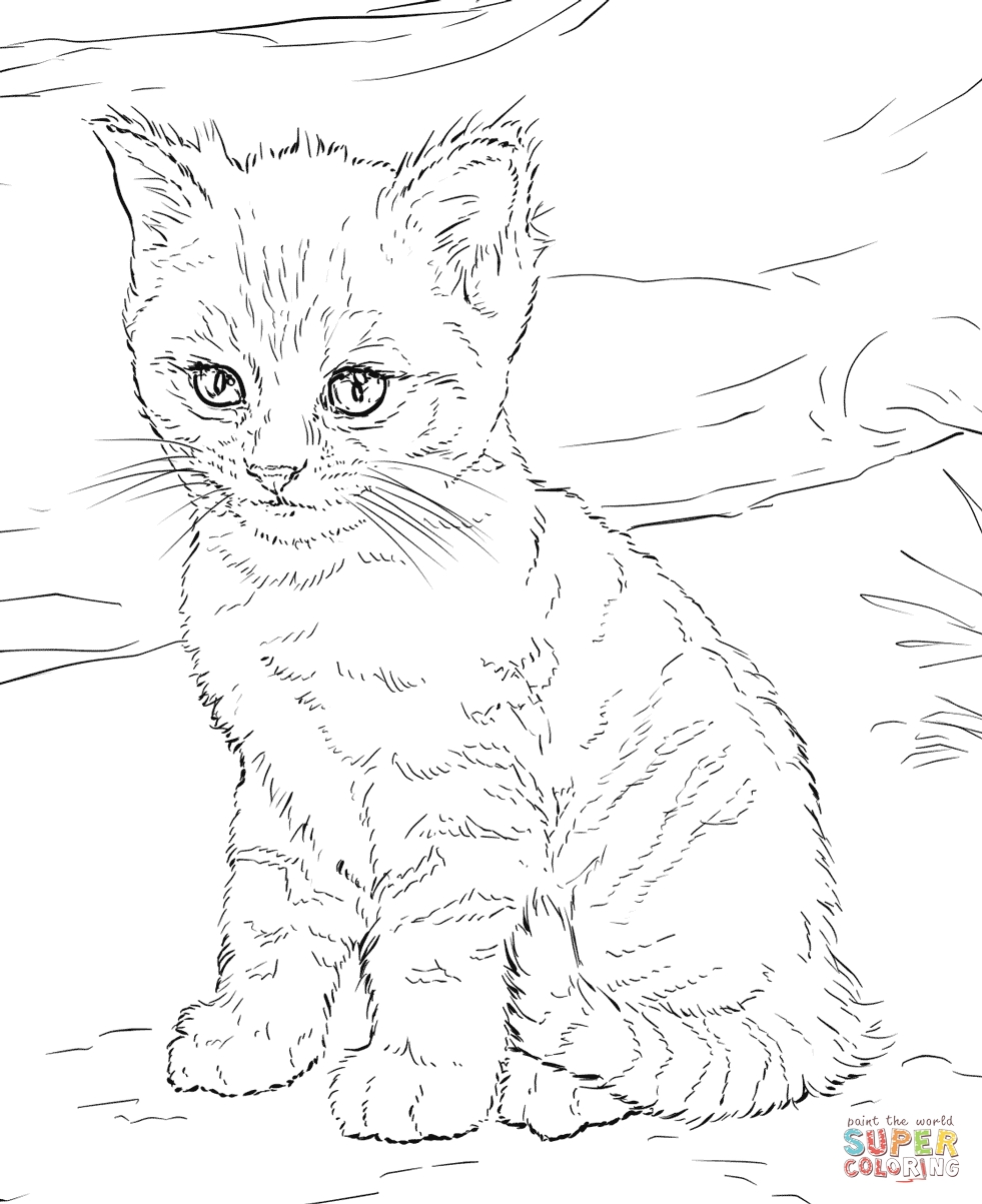 981x1203 Design Cat Animal Coloring Pages