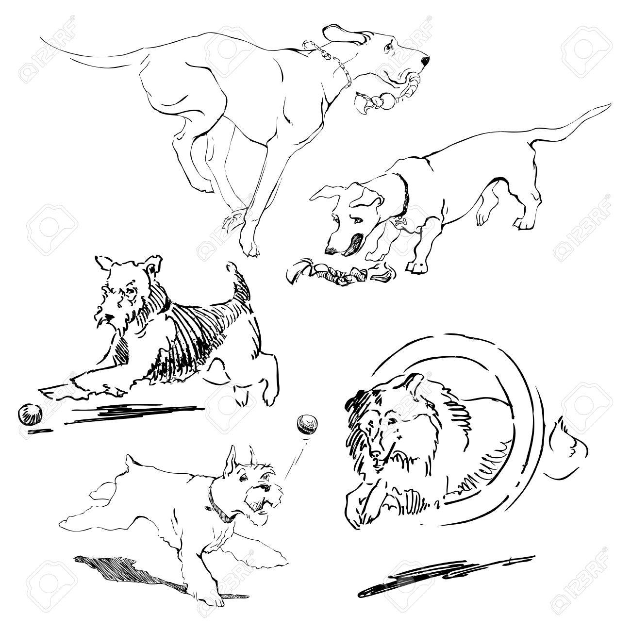 1300x1300 A Set Of Drawings Of Different Breeds Dogs In Motion. Games