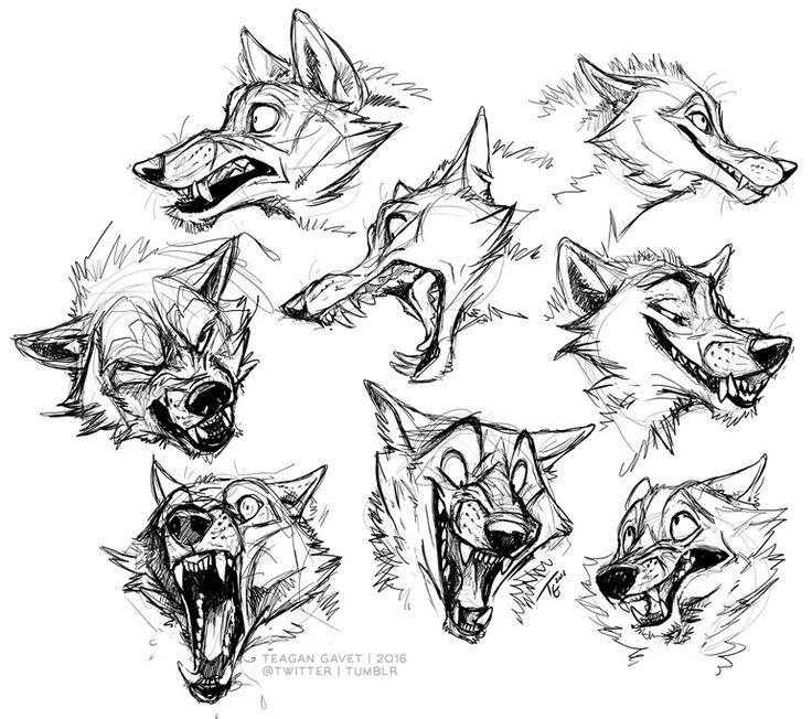 Animal Head Drawing At Getdrawings Free For Personal Use